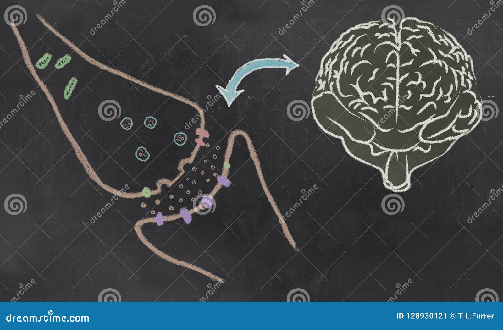 Synaptic Rozłupana ilustracja z Neurotransmitters