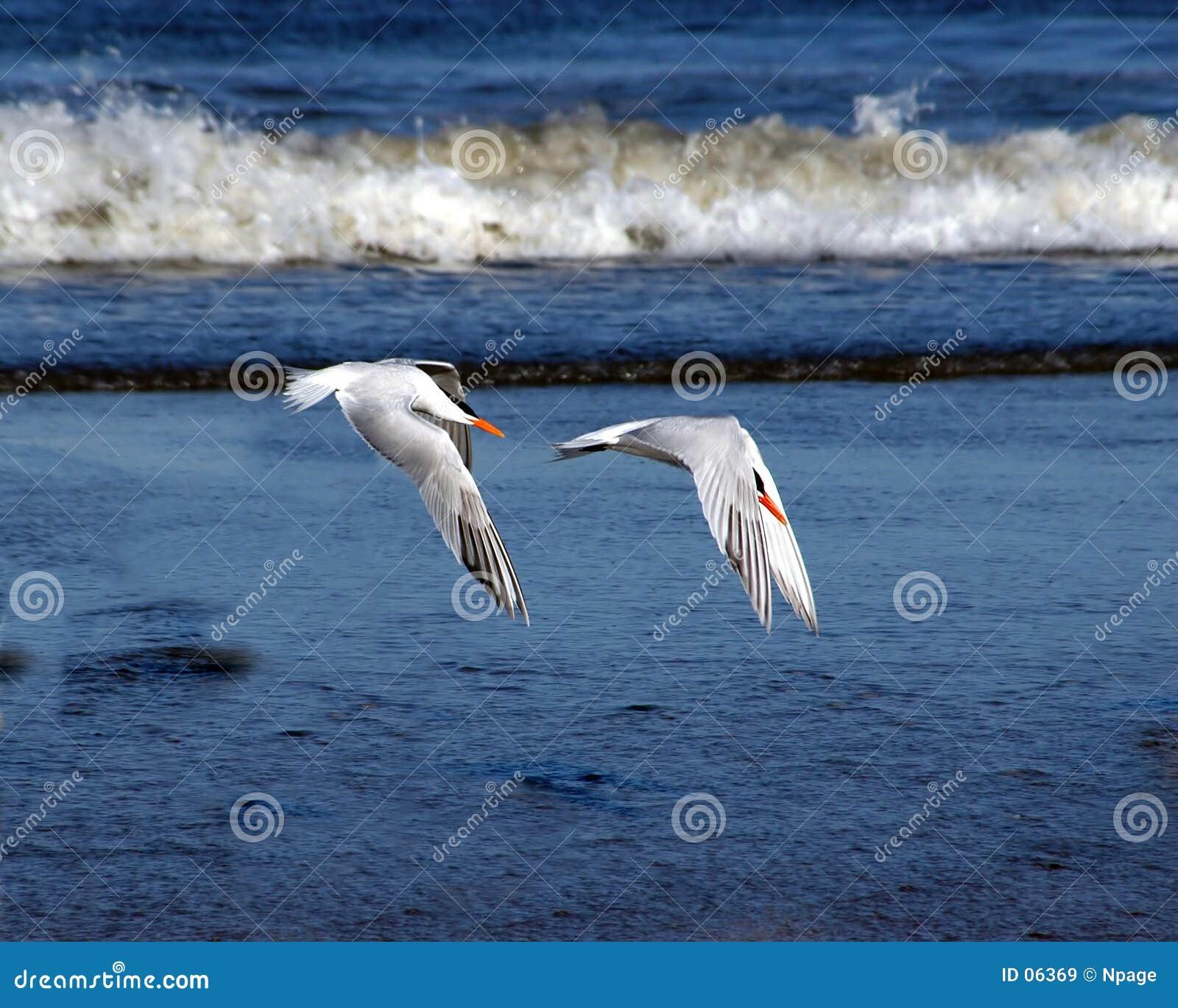 Synchronisierter Flug