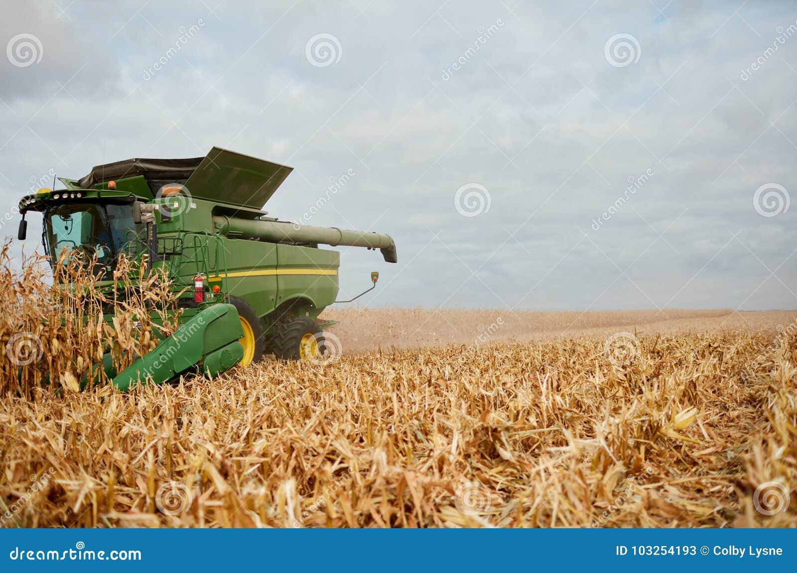 Syndykata żniwiarz zbiera kukurudzy