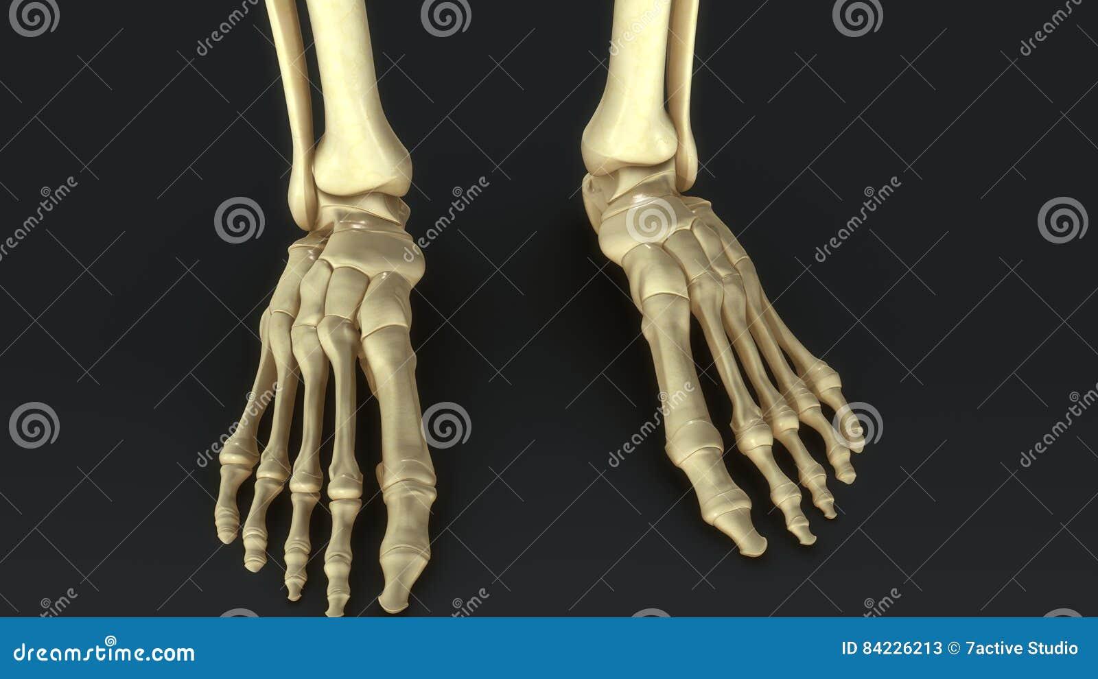 Synovial Joints Stock Illustration Illustration Of Orthopedic