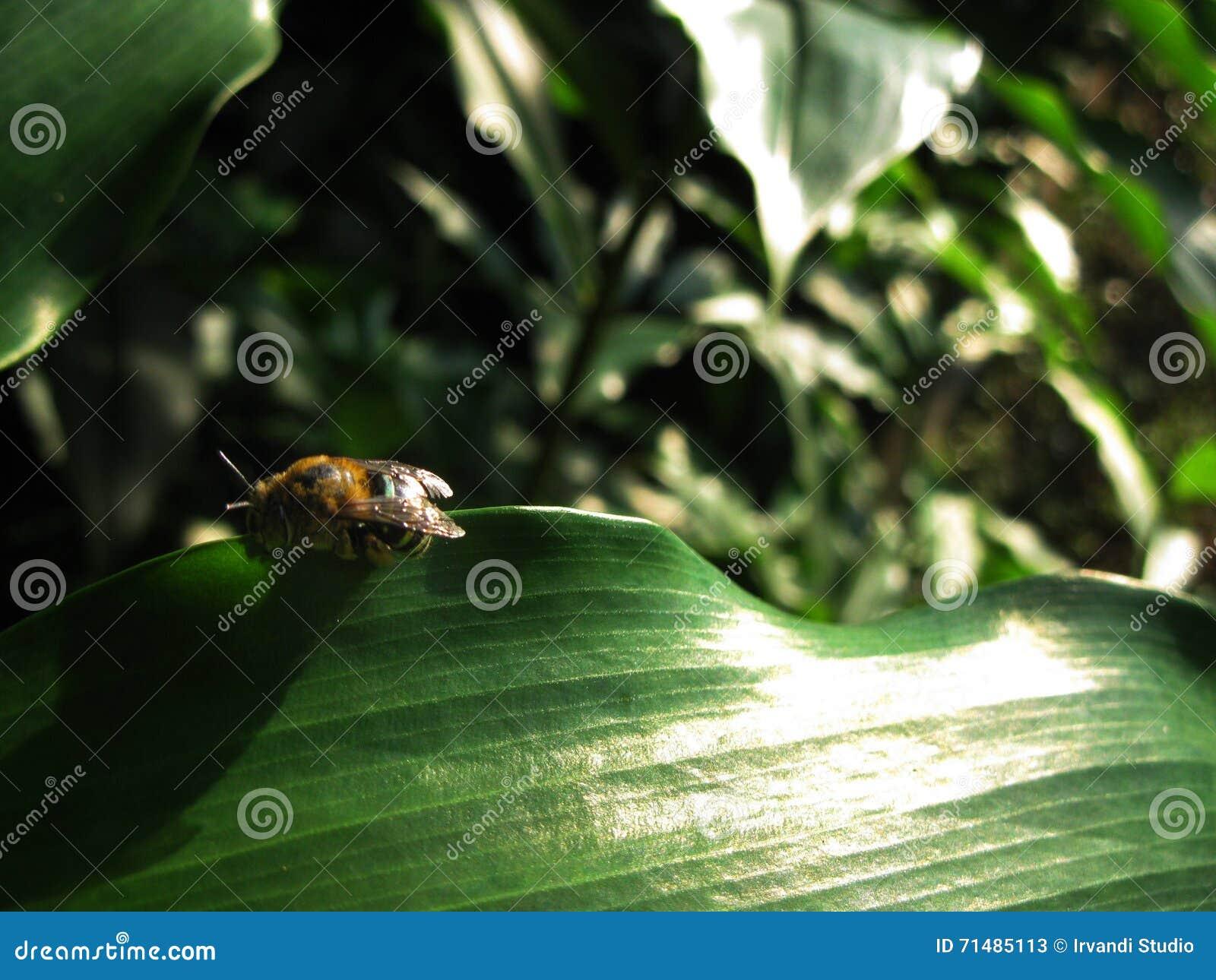Sypialna pszczoła