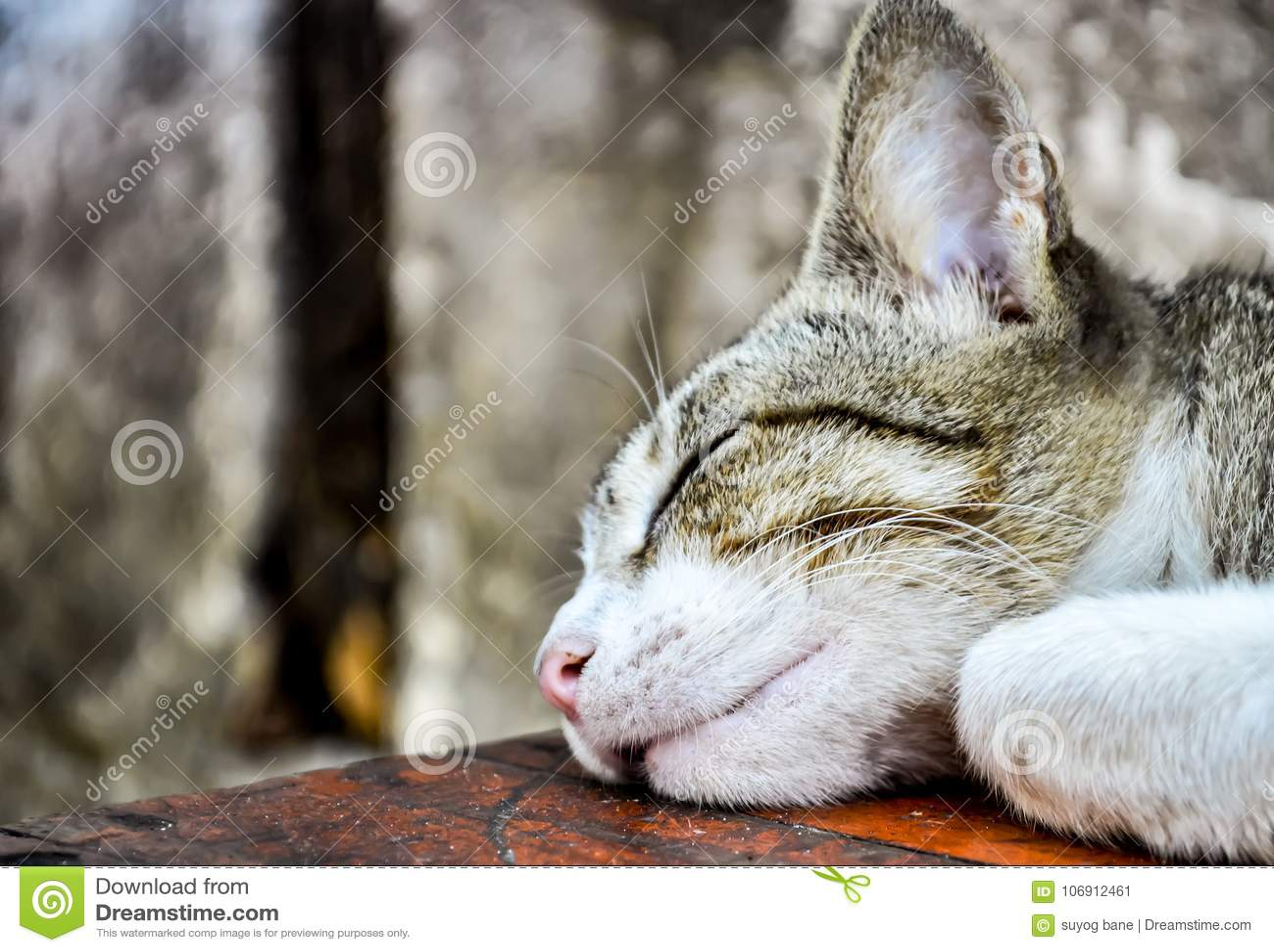 Sypialny kot