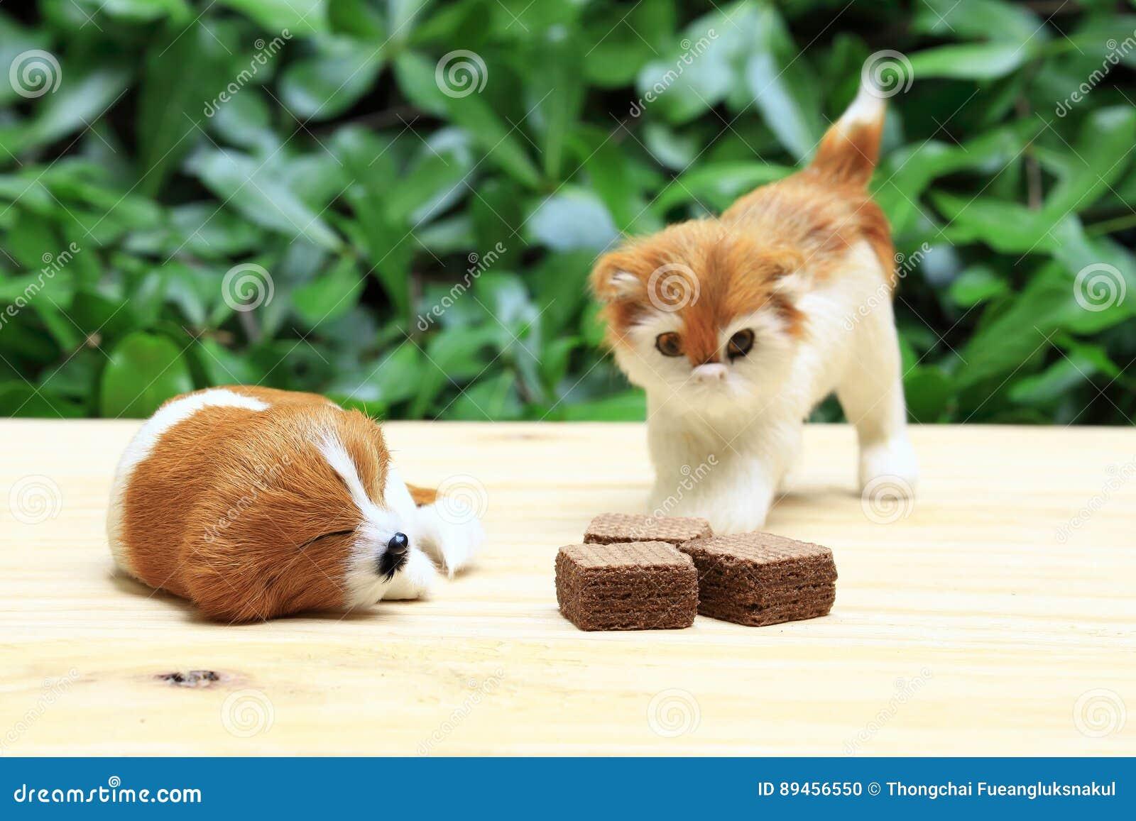 Sypialny pies i kot patrzejemy opłatek z czekoladową śmietanką