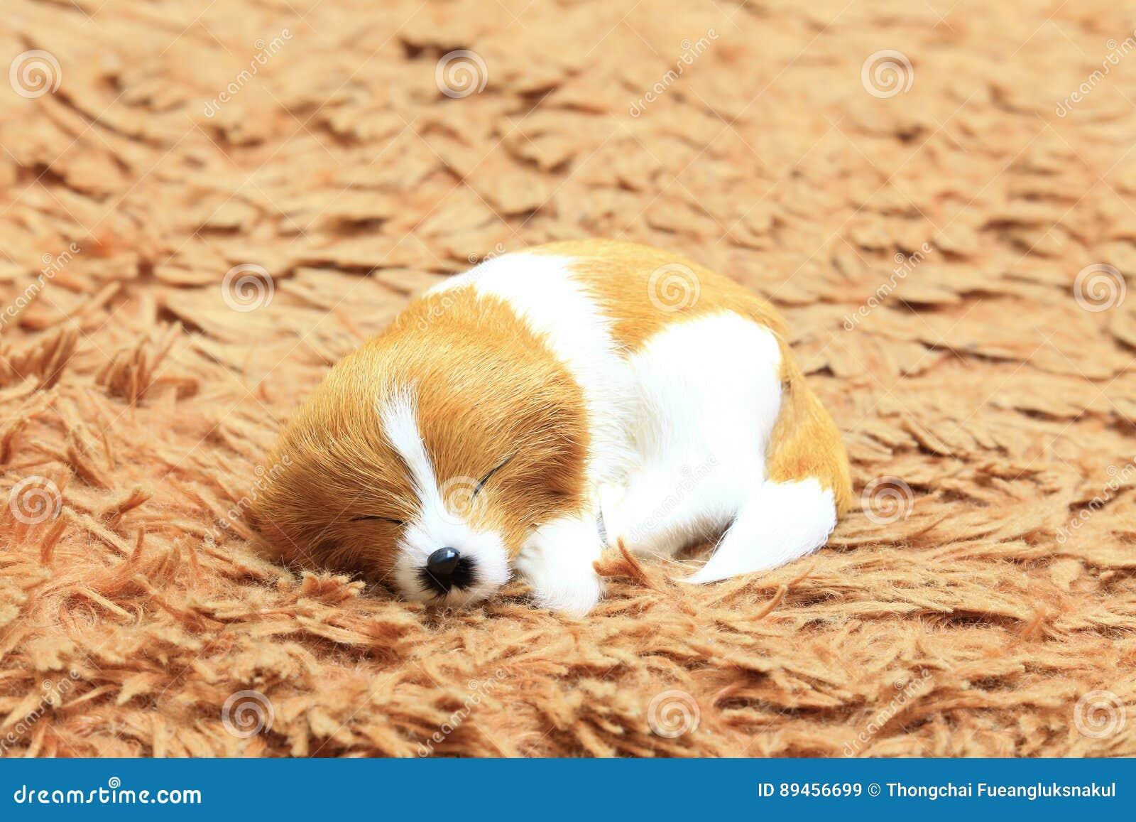 Sypialny pies przy dywanem