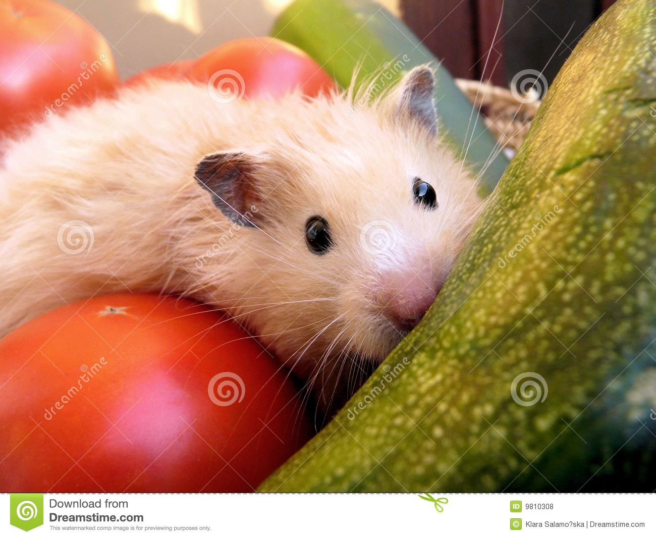 Syrian Hamster Among Vegetables Royalty Free Stock Photos - Image ...