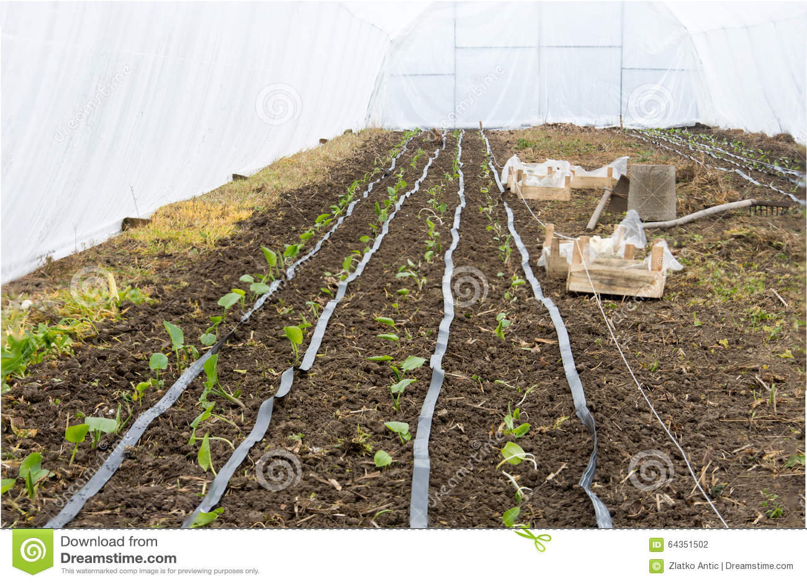 Syst me d 39 irrigation en serre chaude photo stock image 64351502 - Systeme irrigation jardin ...