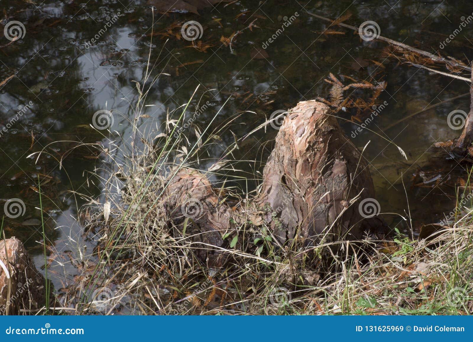 Szaleju fiszorek w wody krawędzi