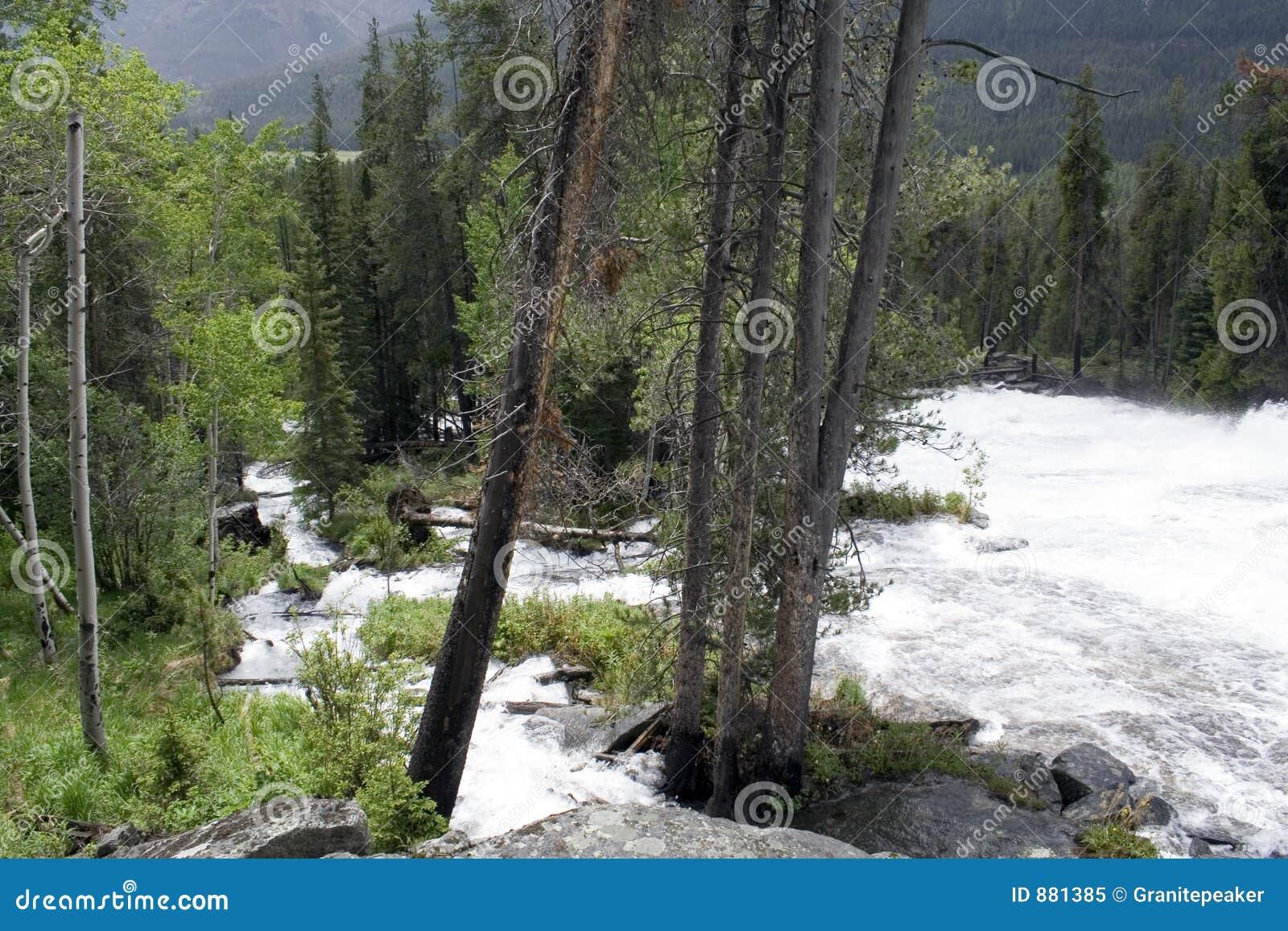 Szalona creek Wyoming