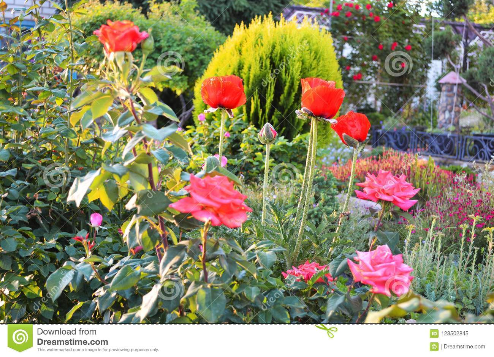 Szalony ogień od jaskrawych jedwabniczych ogromnych kwiatów