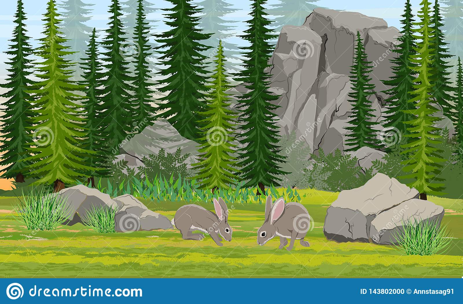 Szare Europejskie zając w łące Świerkowy las, kamienie i góry, trawa
