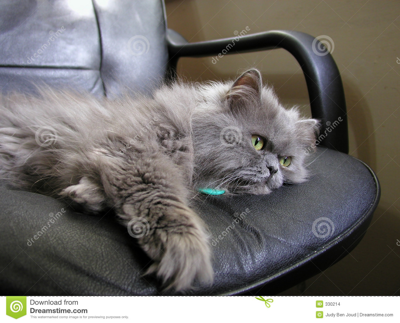grey kitten wallpaper 294 - photo #49