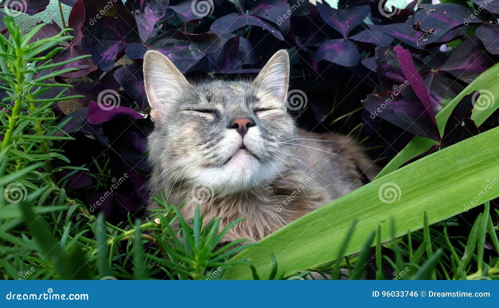 Szary kota lying on the beach w ogródzie