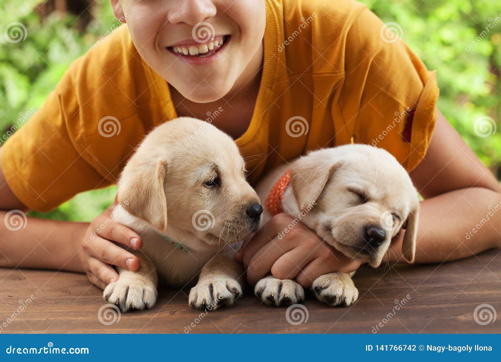 Szczęśliwa nastolatek chłopiec pozuje z jego ślicznymi labradorów szczeniakami