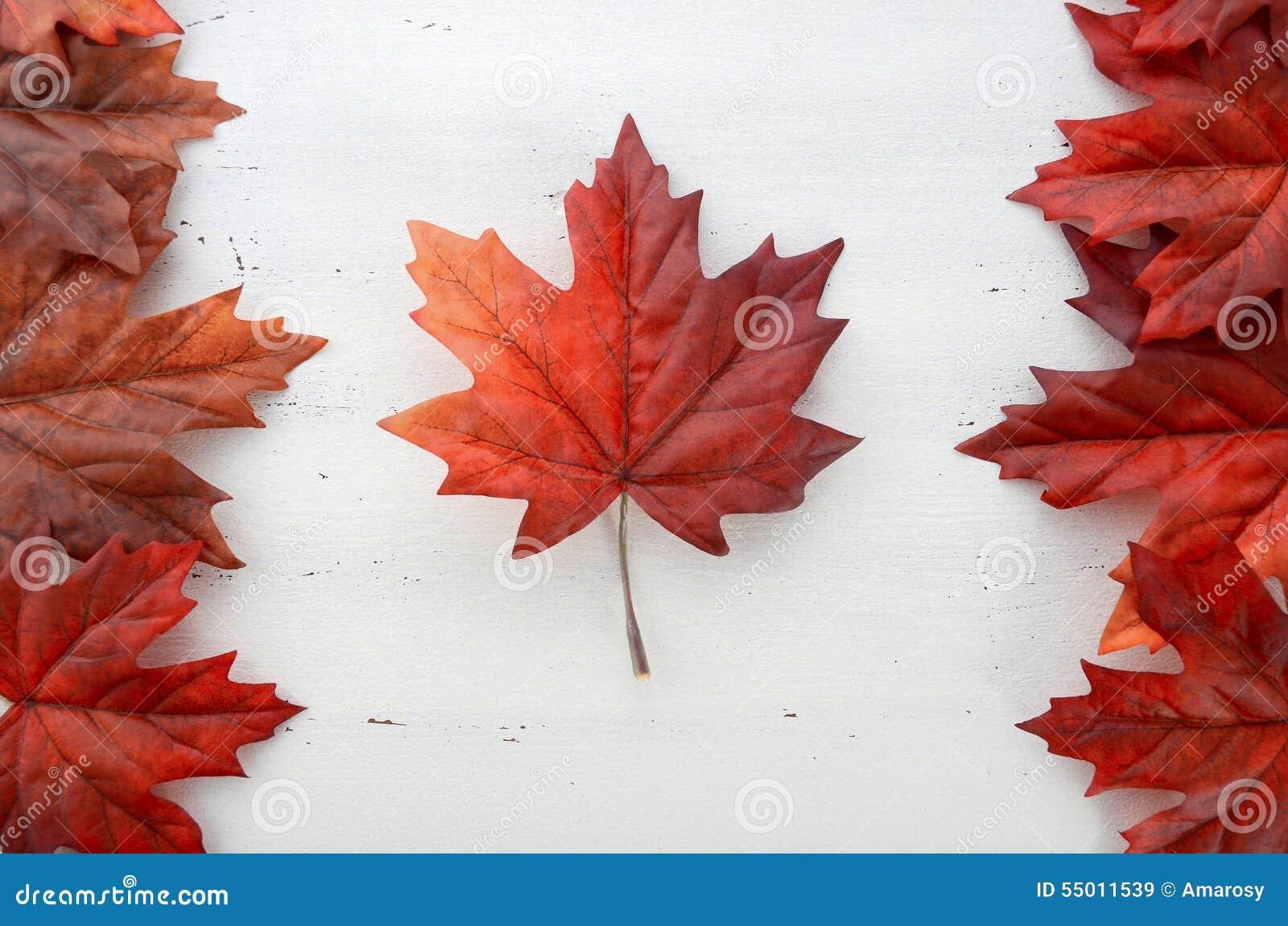 Szczęśliwego Kanada dnia czerwoni jedwabniczy liście w kształcie kanadyjczyk Zaznaczają