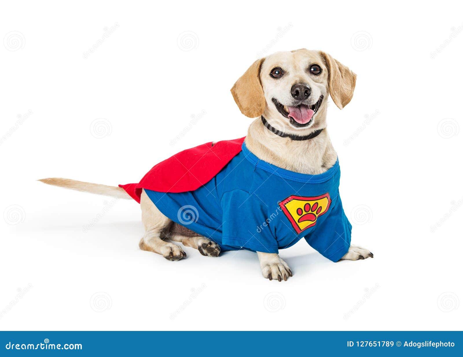 Szczęśliwy pies Jest ubranym Super bohatera kostium
