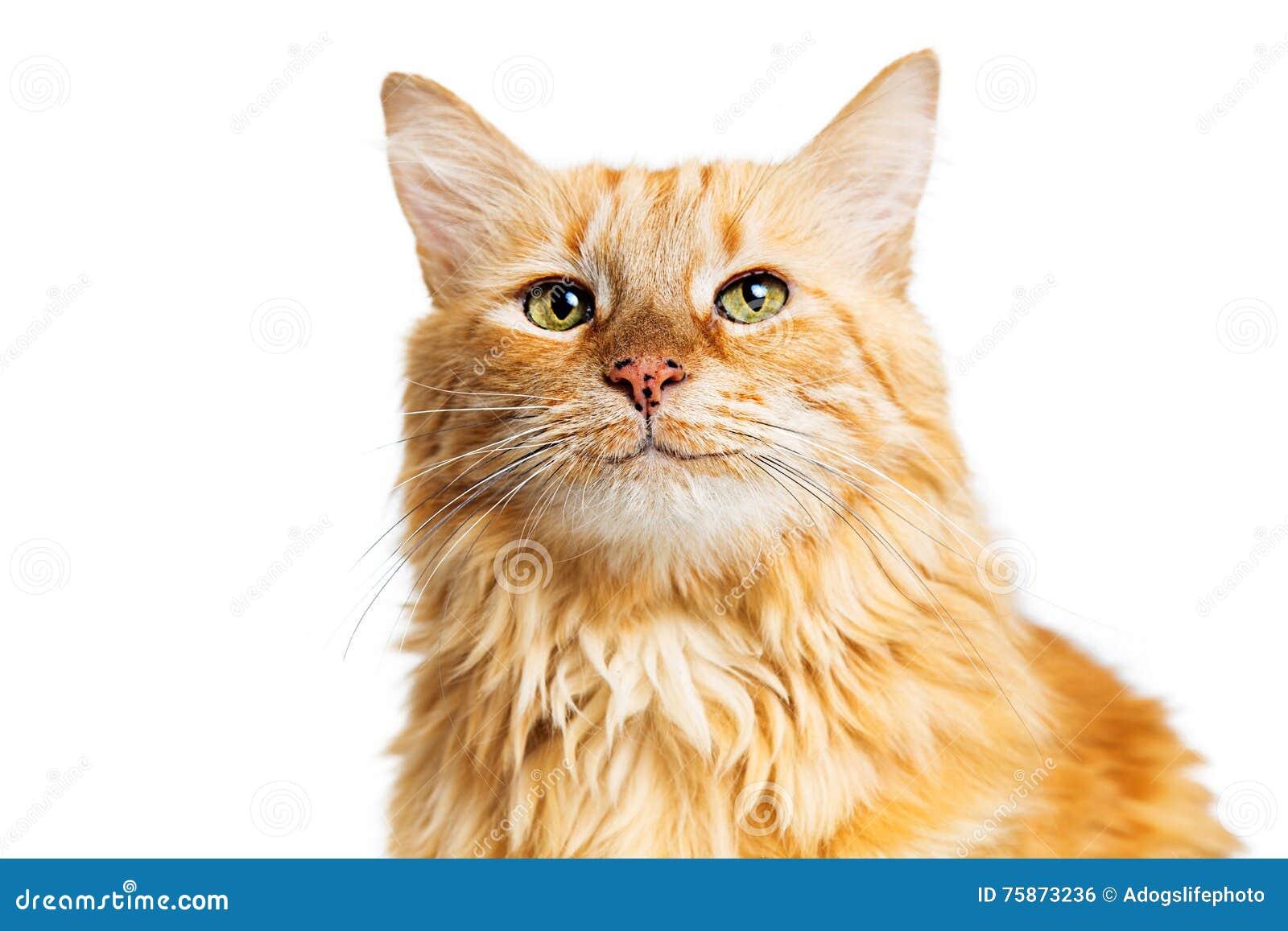 Szczęśliwy Uśmiechnięty Pomarańczowy Tabby kot