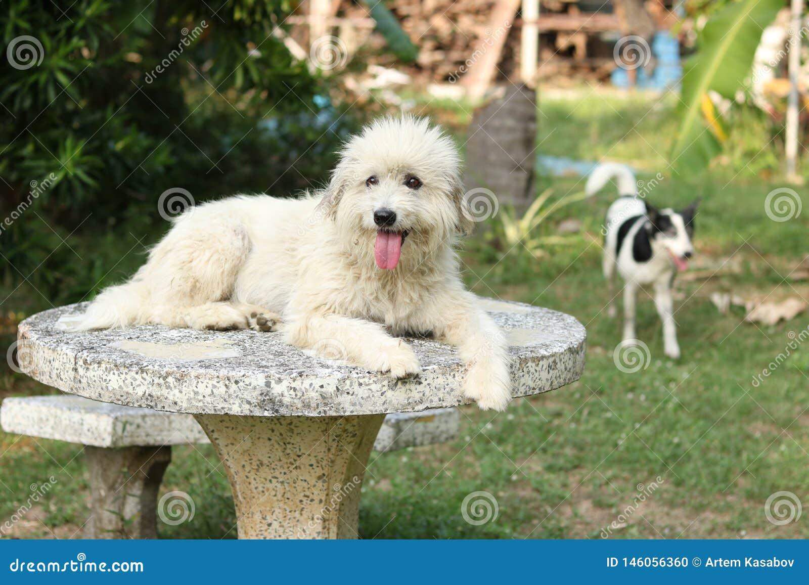 Szcz??liwy pies w ogr?dzie