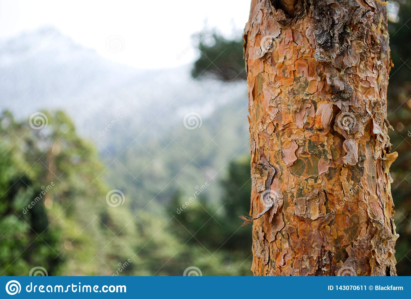 Szczegół drzewna barkentyna