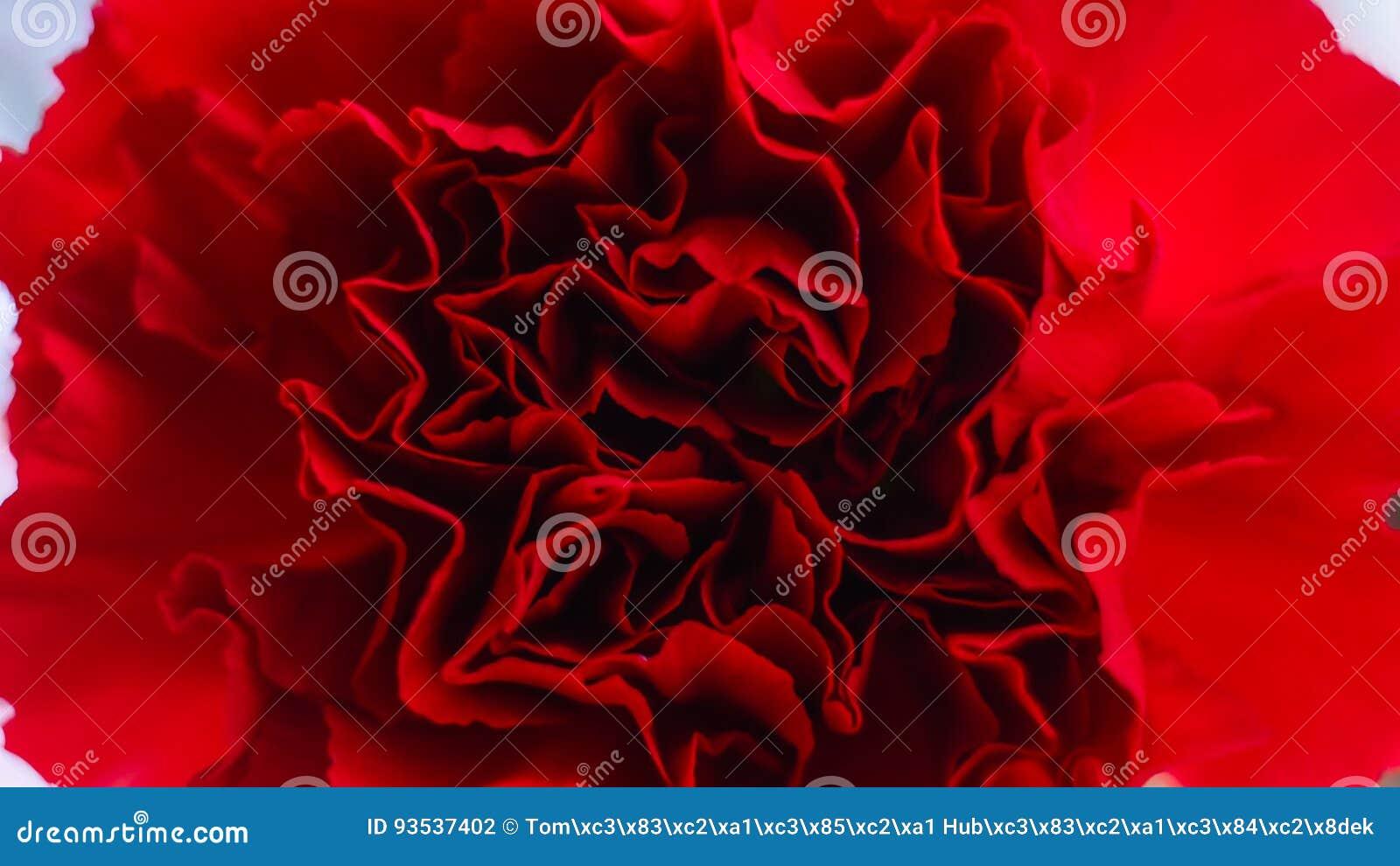 Szczegół kwiat