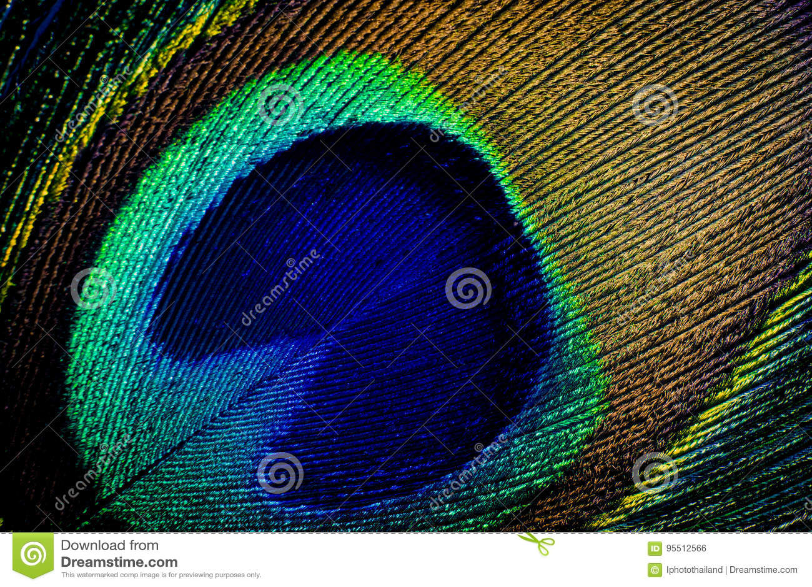 Szczegół zamknięty pawia piórka oko up