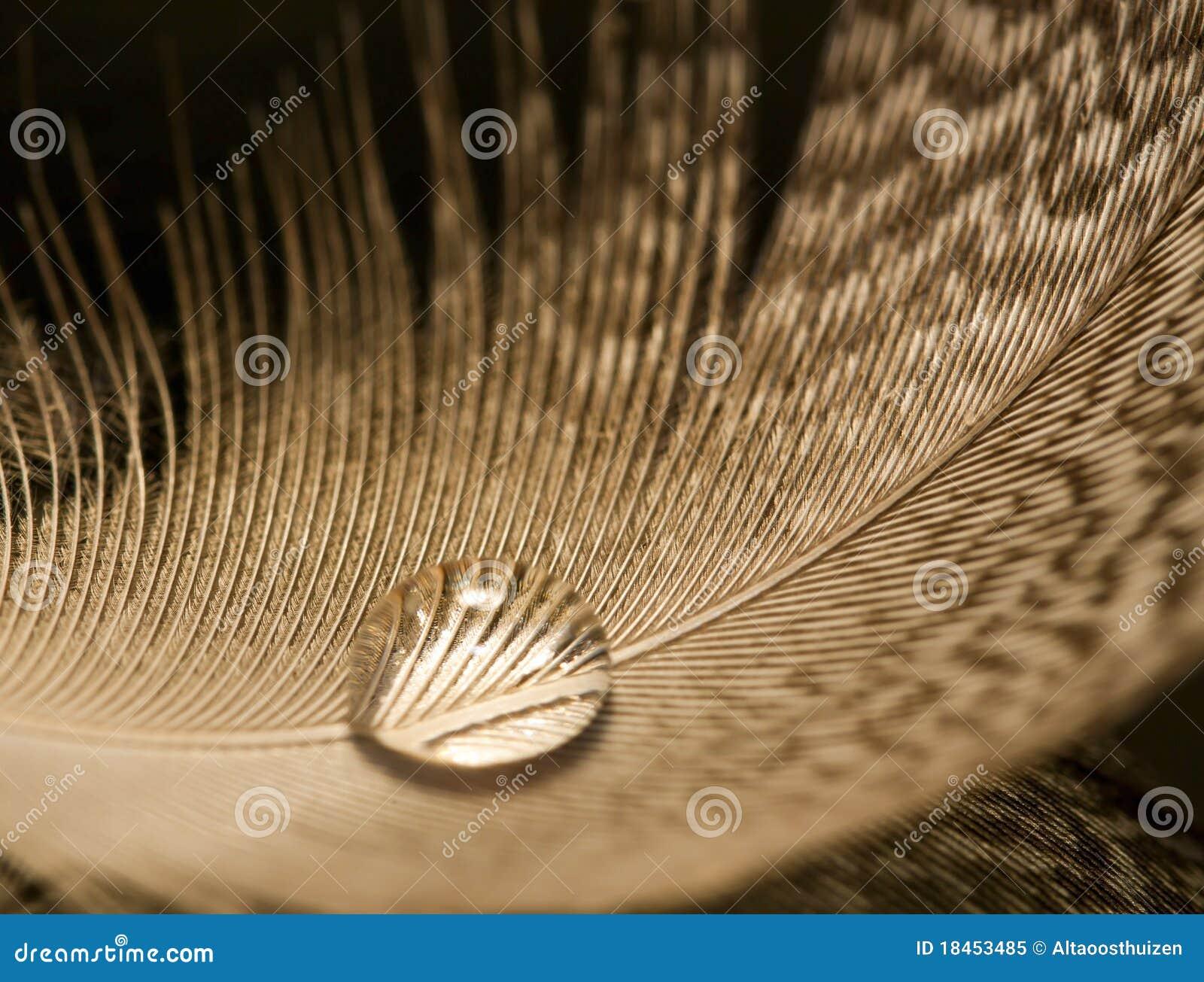 Szczegółu kropli piórka macro wody biel