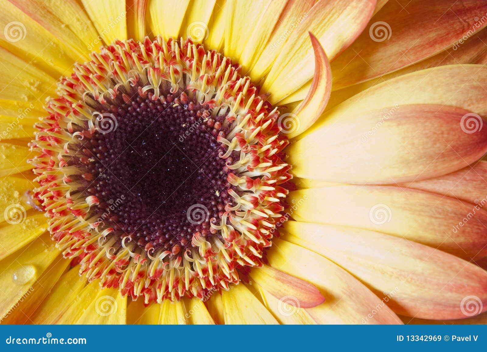 Szczegółu kwiat