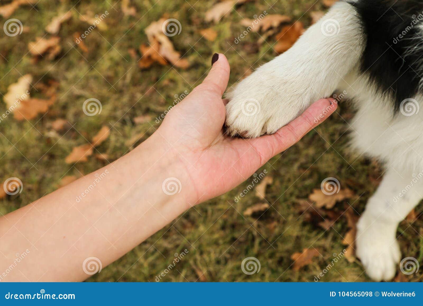 Szczegółu obrazek mienie ręka i dogłapa