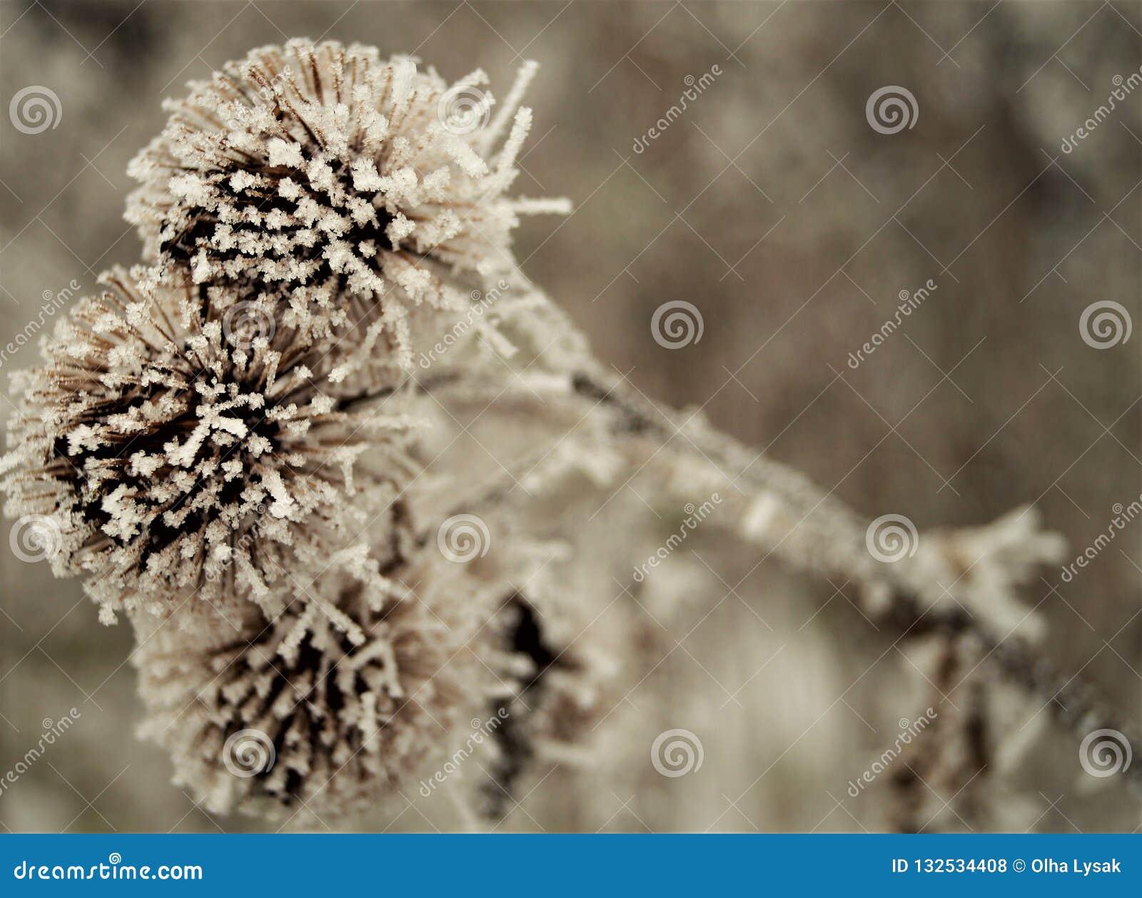 Szczegóły przyjazd zima kwiaty są osetem