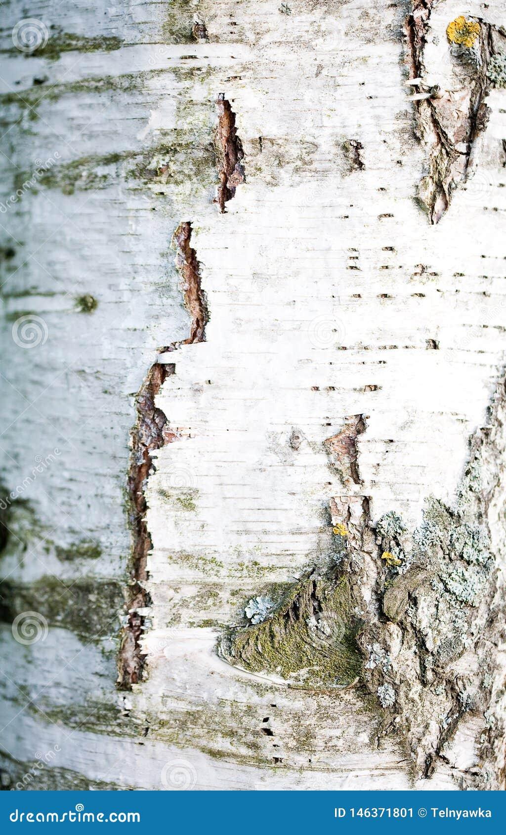 Szczeg?? drzewna barkentyna
