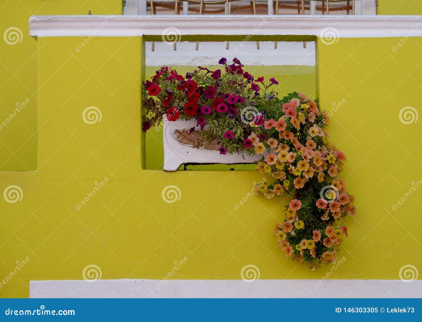 Szczeg??owa fotografia dom z kwiatami outside w malajczyk ?wiartce, Bo Kaap, Kapsztad, Po?udniowa Afryka