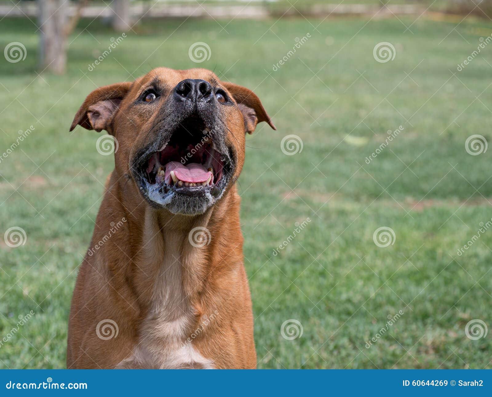 Szczekliwy pies