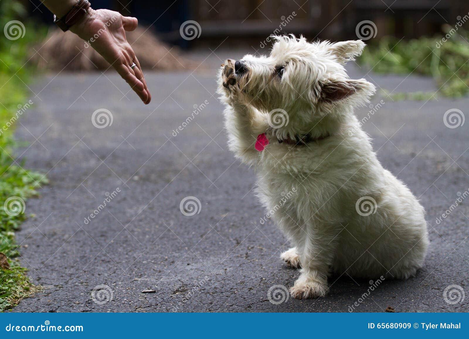 Szczeniaka chwiania ręki