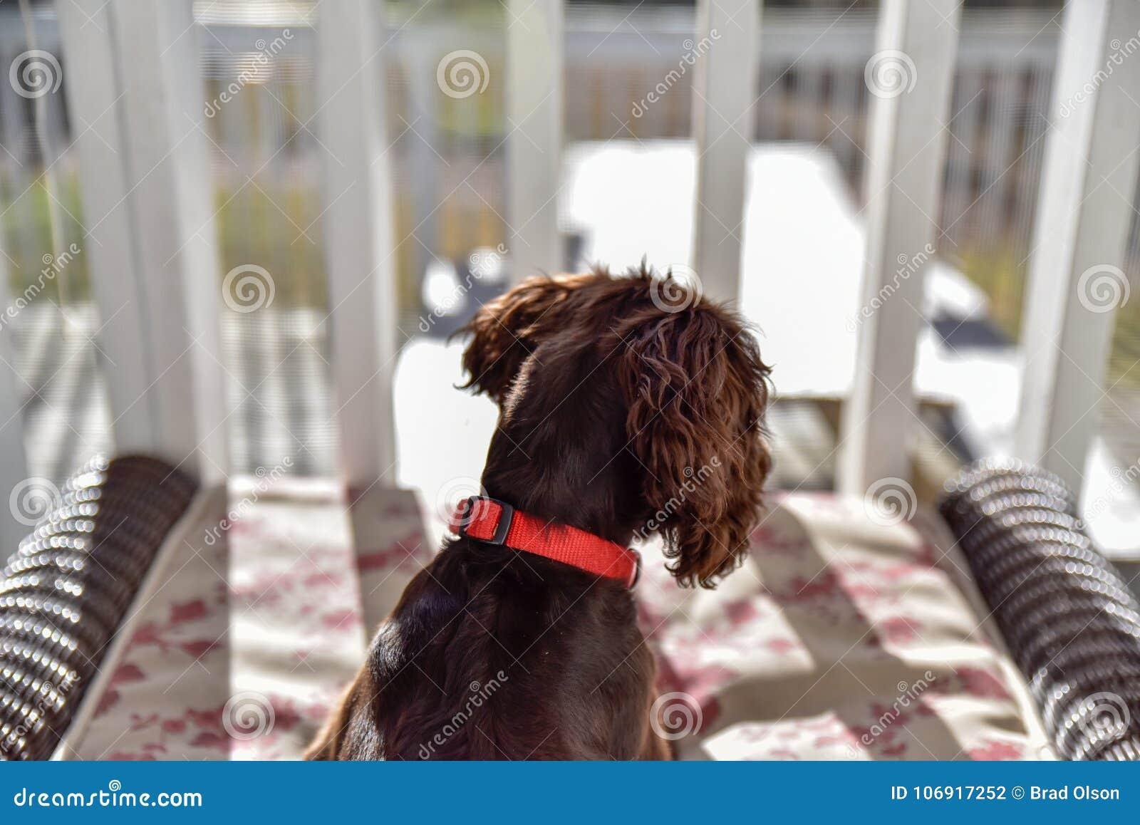 Szczeniaka pies bawić się w dół i relaksujący kłaść