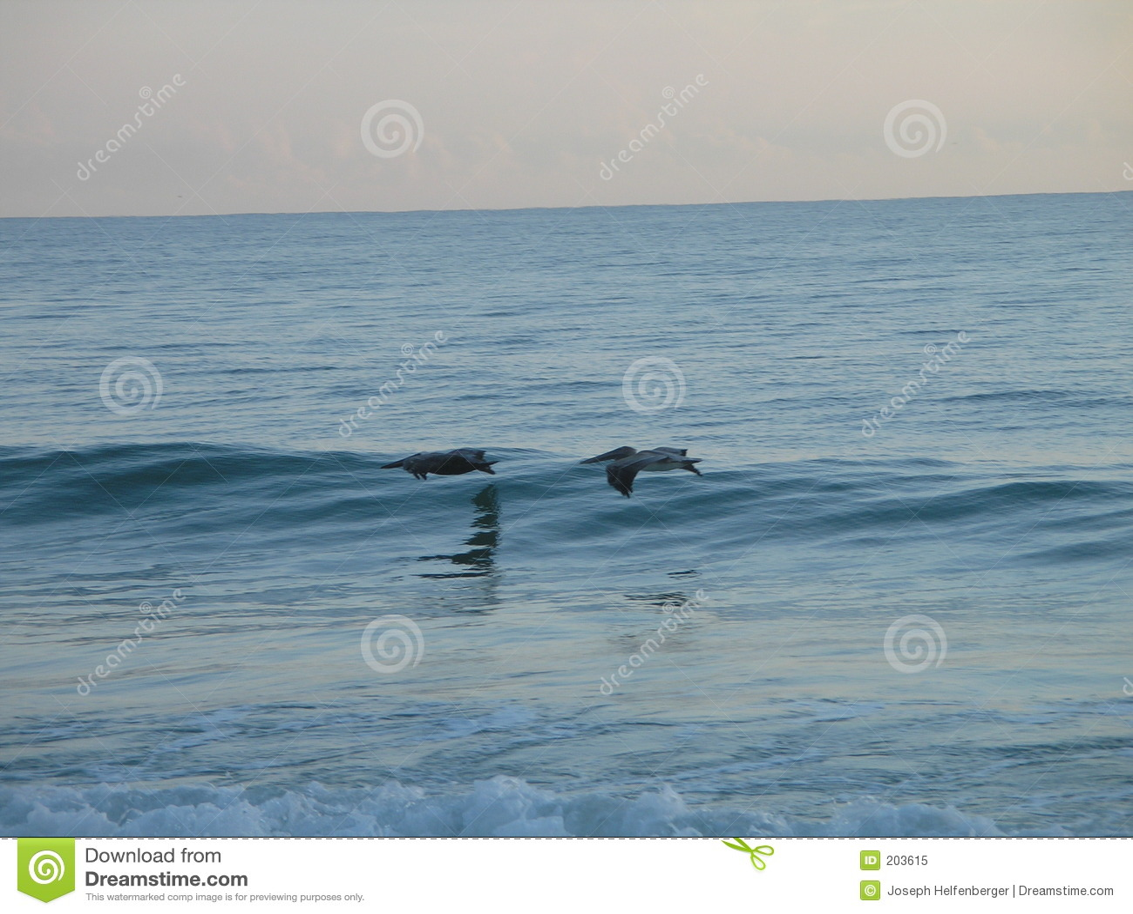 Szczotkarski morza