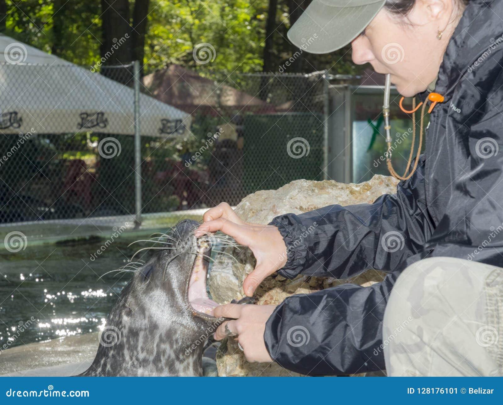Harbour seal training
