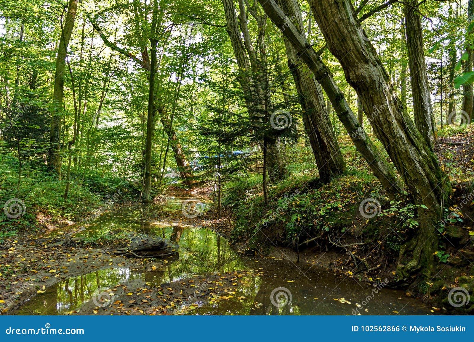 Szenisch von den Sümpfen im Nationalpark Üppiger grüner Sumpf