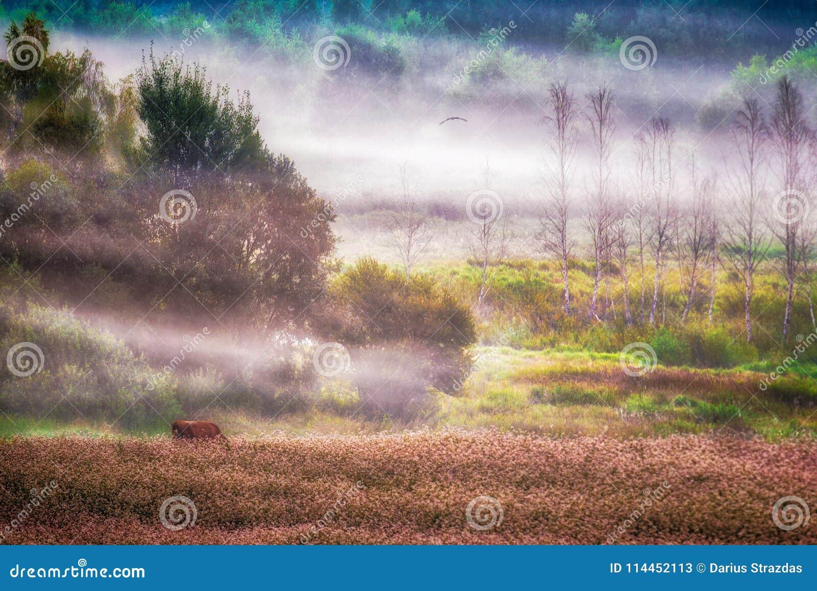 Szenische landwirtschaftliche Landschaft