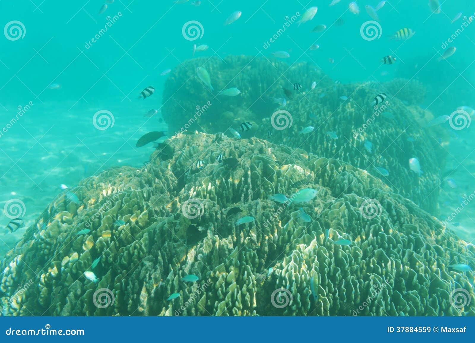 Szkoła rybia pływacka pobliska rafa. Podwodny strzał. Morski życie