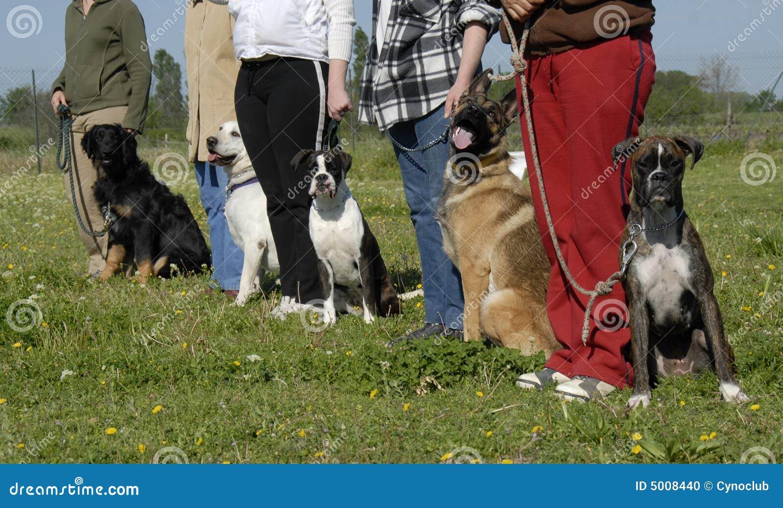 Szkolenia psów