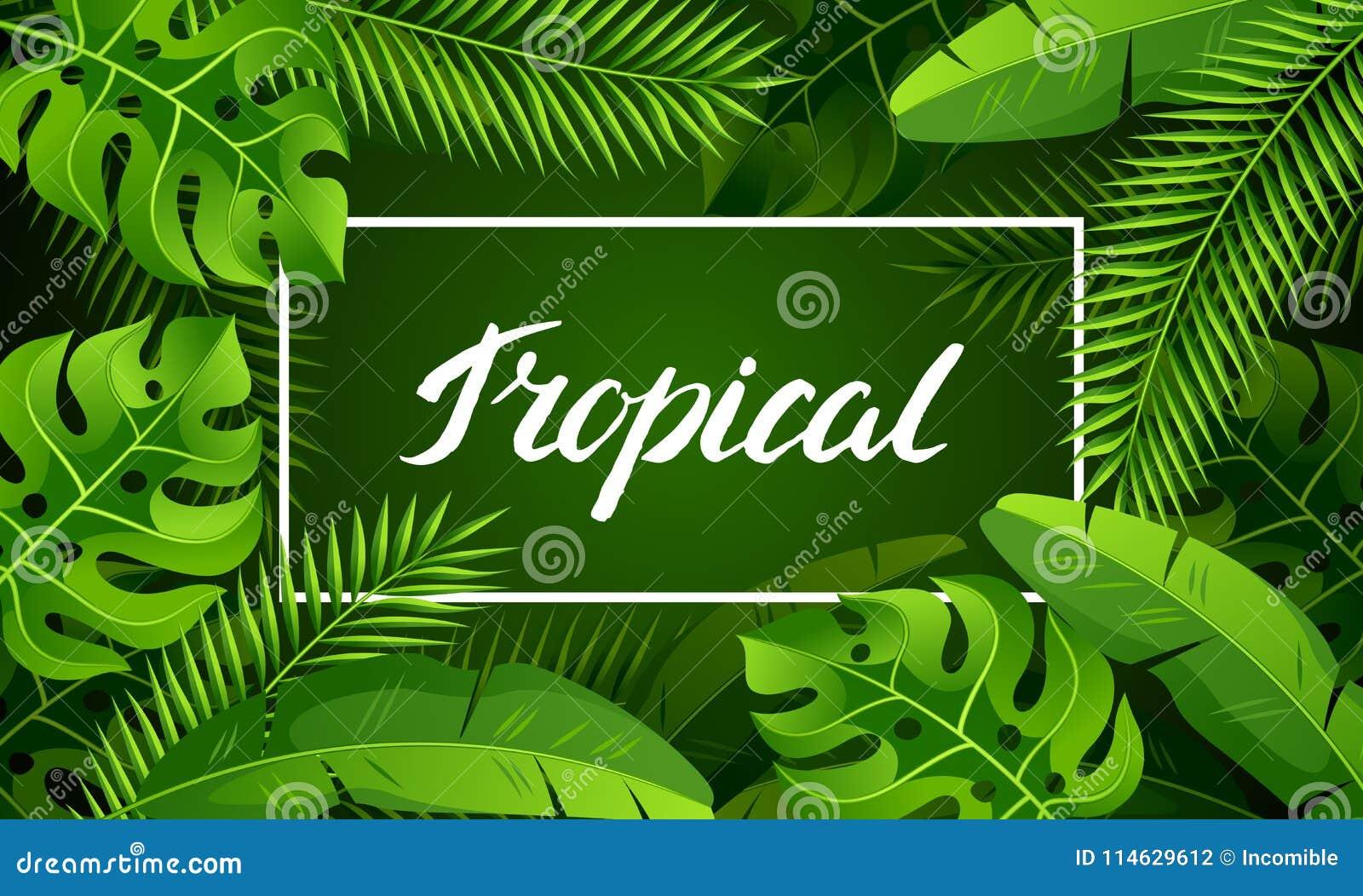 Sztandar z tropikalnymi palmowymi liśćmi Egzotyczne tropikalne rośliny Ilustracja dżungli natura