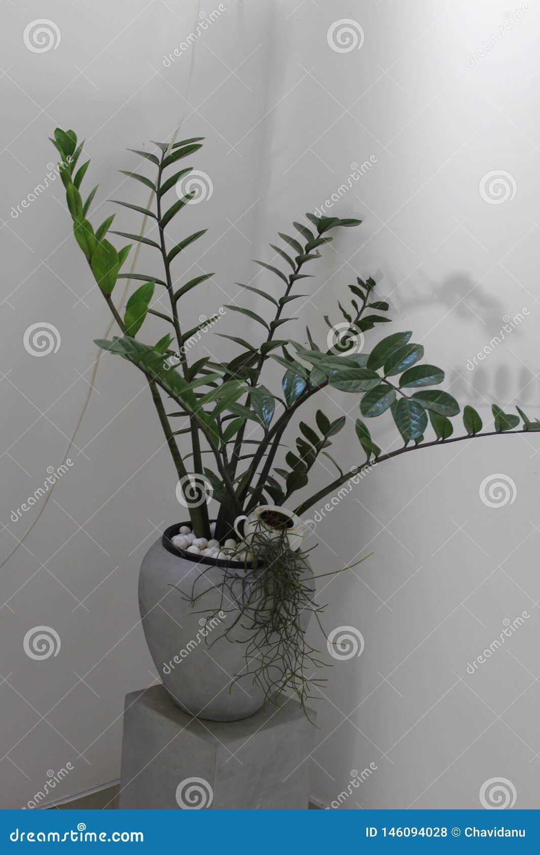 Sztuczny cementowy roślina garnek z salową rośliną
