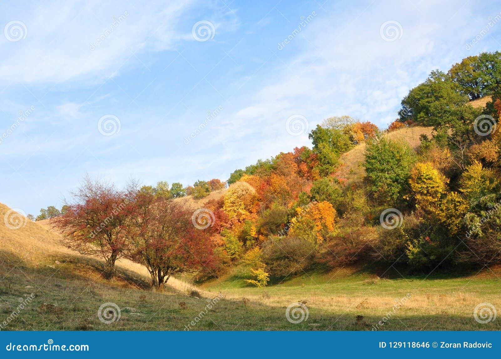 Sztuka natura Colours jesień