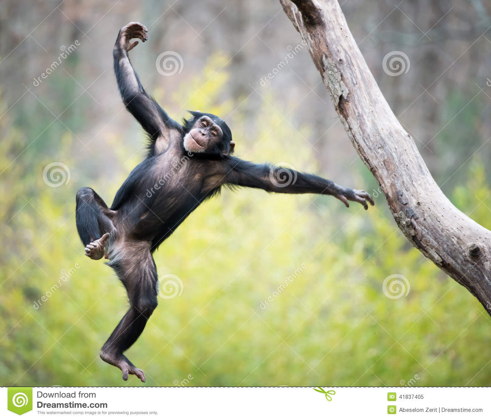 Szympans w locie