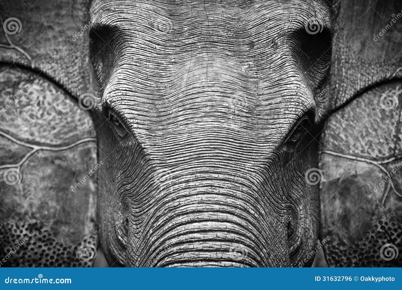 Très Tête D'éléphant En Noir Et Blanc Photo stock - Image: 31632796 LU99