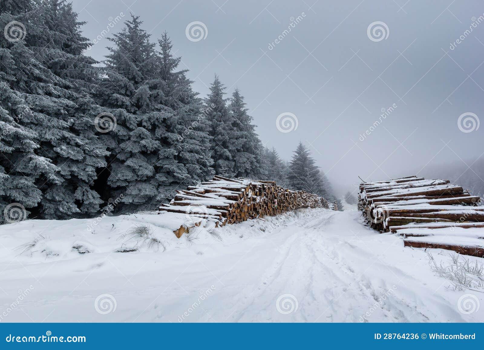 Täckt Snow loggar och pälsfodrar trees