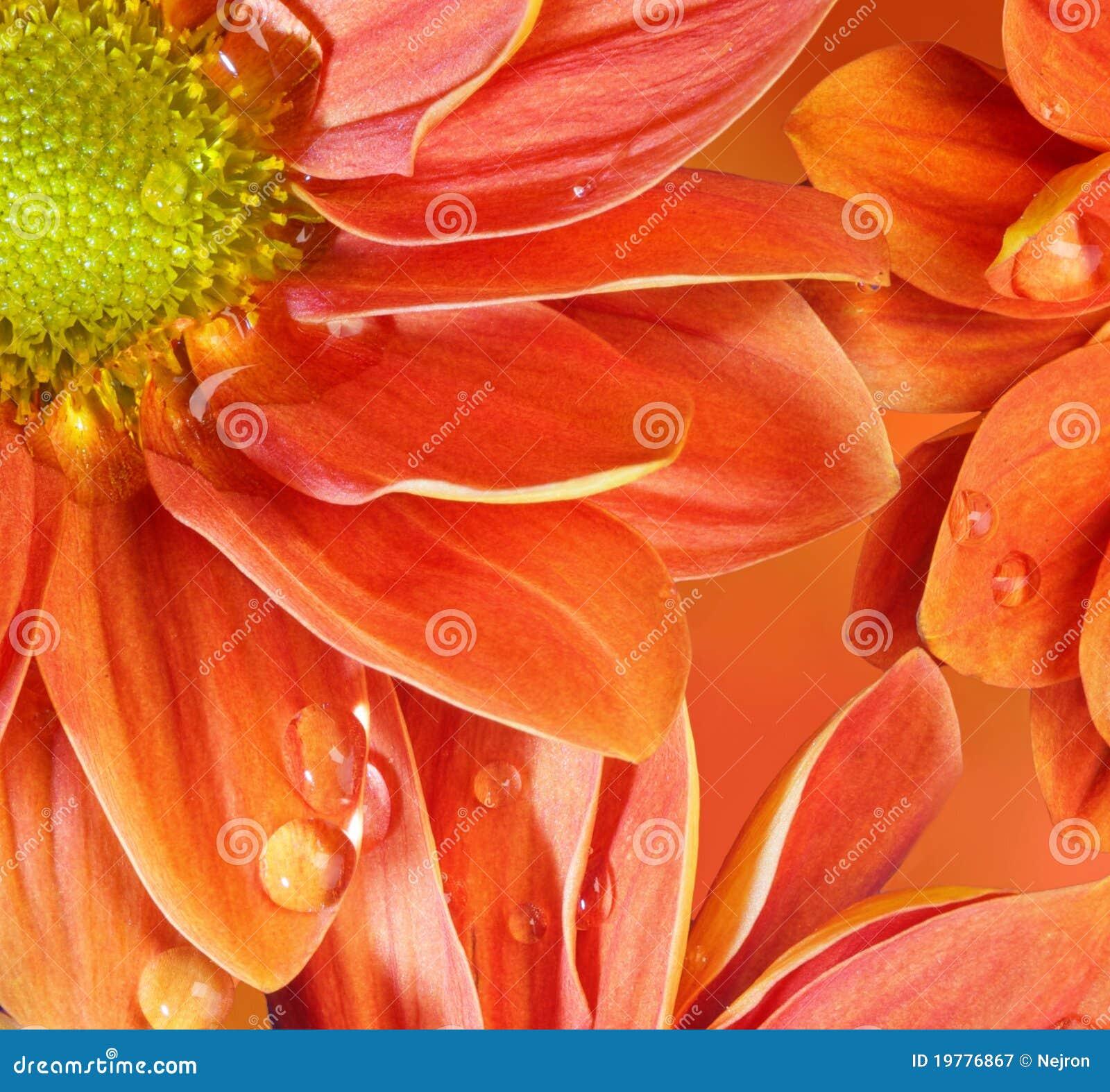 Tät blommaorange reflekterad upp vatten
