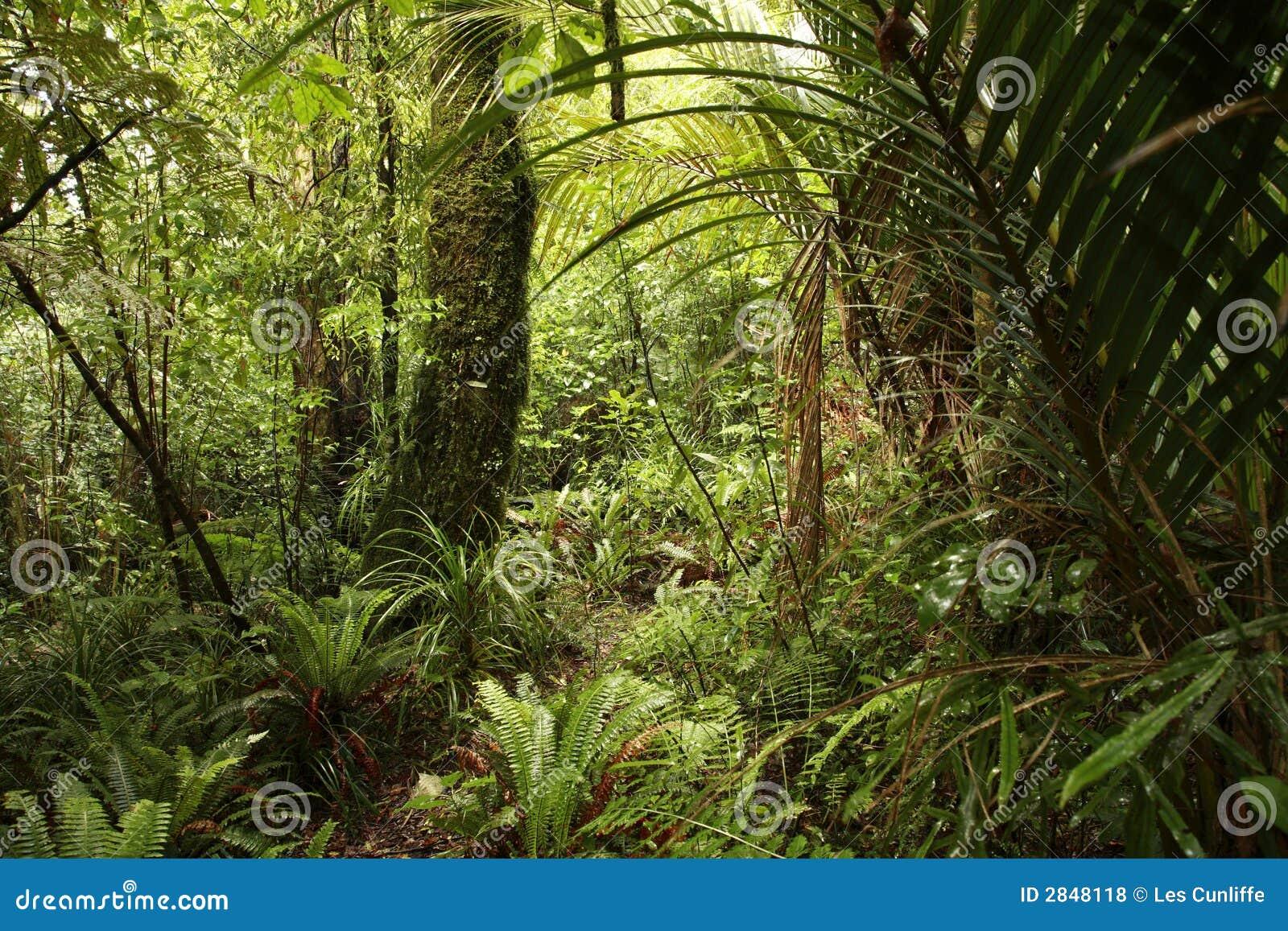 Tät djungel