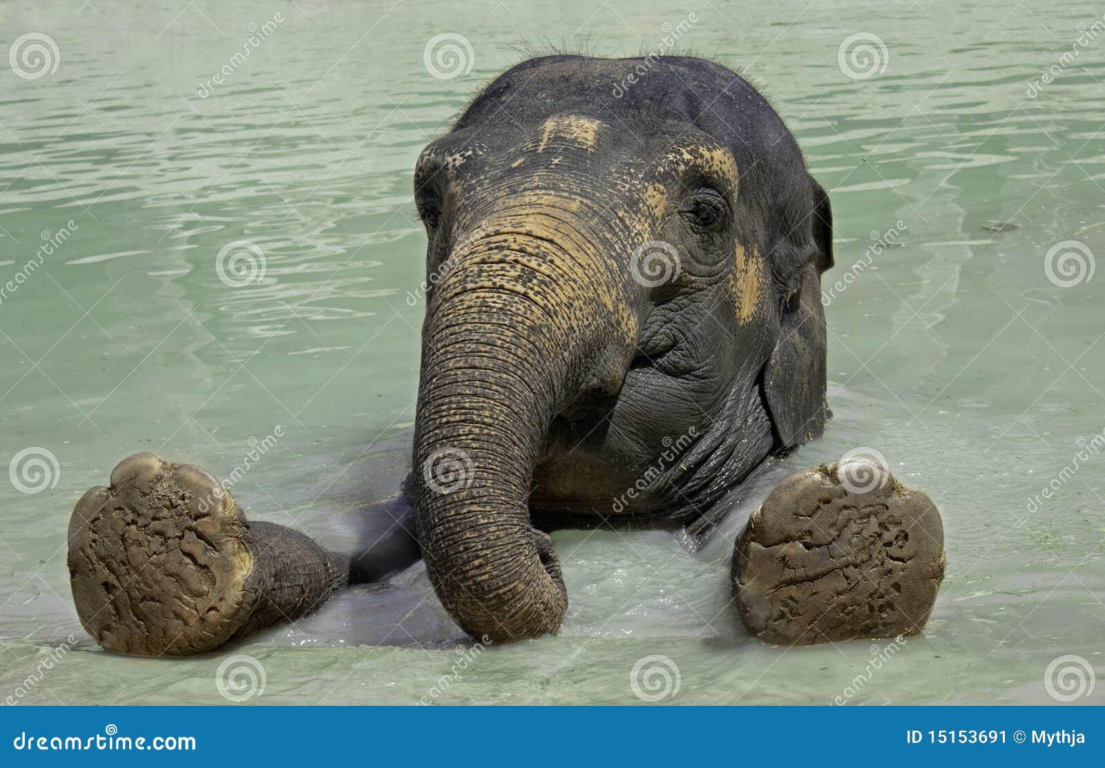 Tät elefant upp