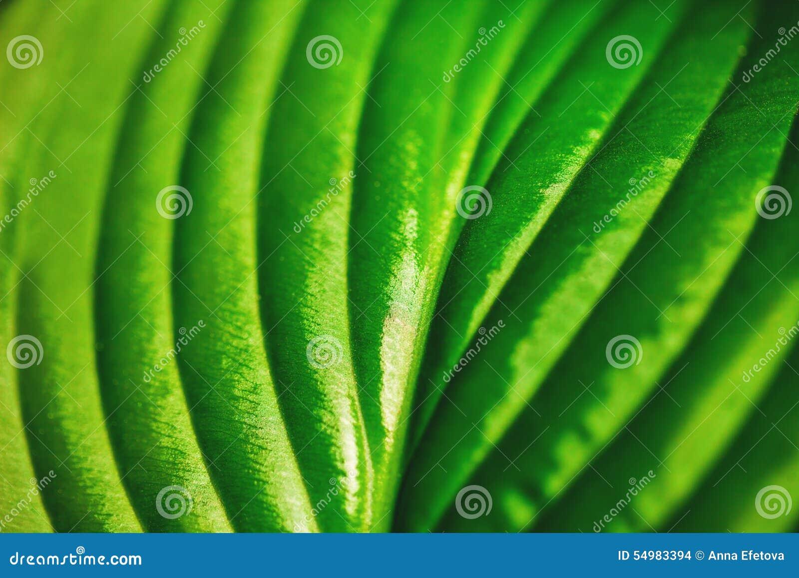Tät grön leaf upp