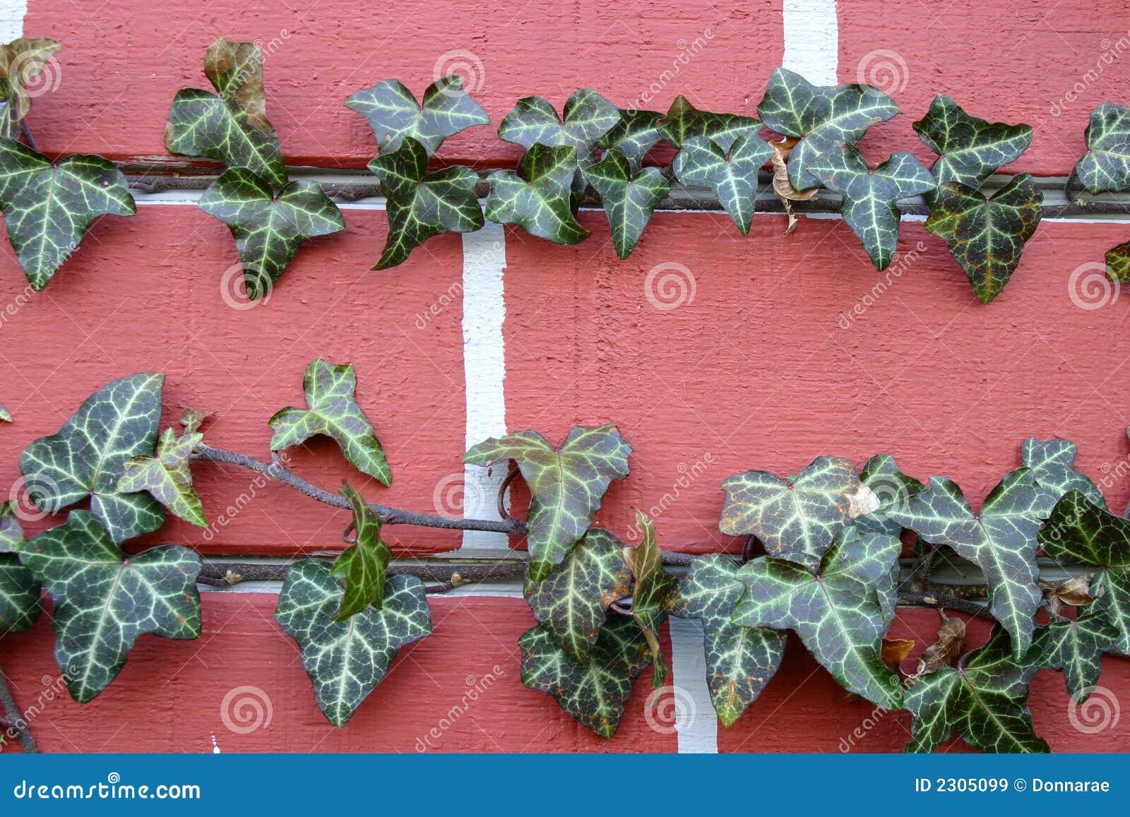 Tät murgröna för tegelsten upp
